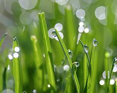 grass-dew.jpg