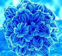 nano-flowers.jpg