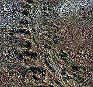 Mirza Galib Footstep1