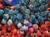 madela_flowers_1.jpg