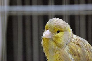 Mirza Galib Bird