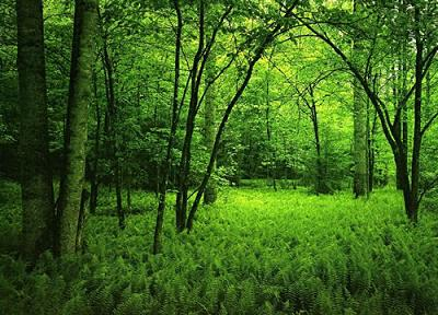 green-earth